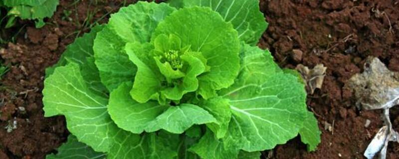 5月份种什么蔬菜