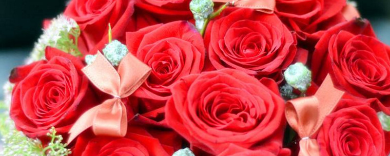 10朵玫瑰花的含义