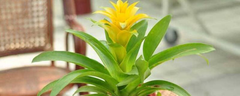 花叶子发黄怎么解决