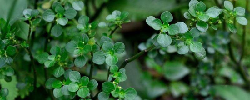 杀虫剂对植物有伤害吗