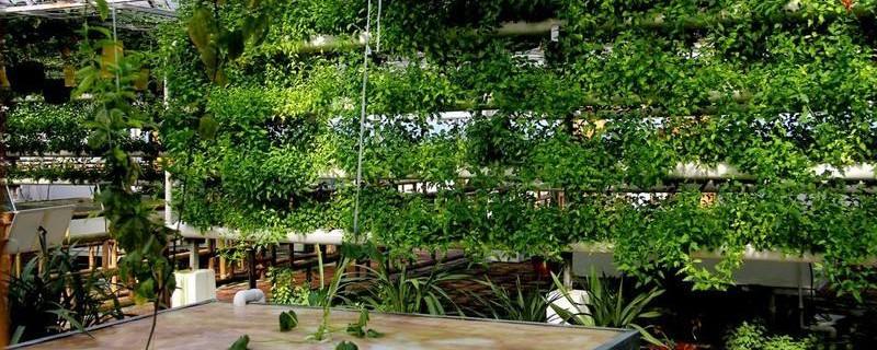 无土栽培植物与室内植物有什么不同