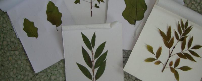 自制花草标本