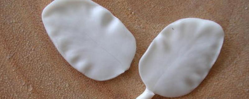 双子叶植物种子结构