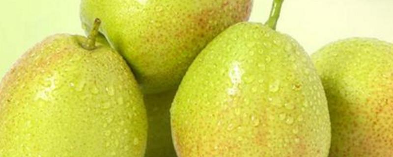 梨子是什么季节的水果