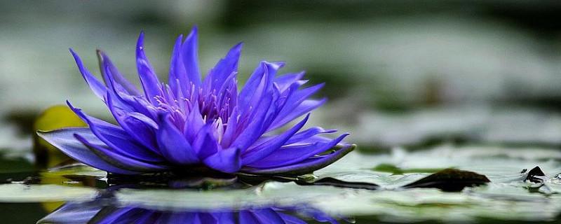 哪些花可以做纯露