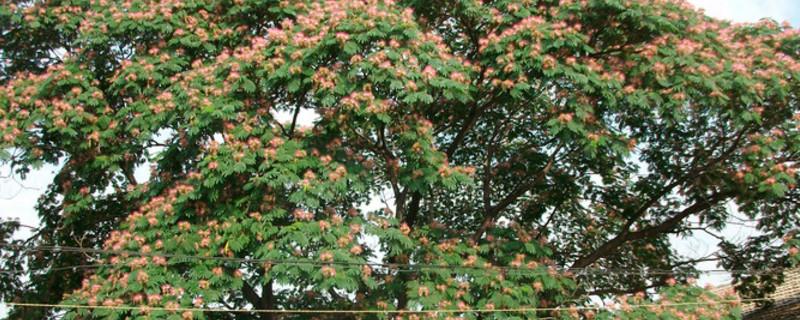 榕花树的寓意