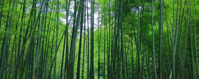 竹子适合种在什么地方