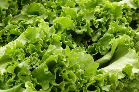 七月份种什么蔬菜