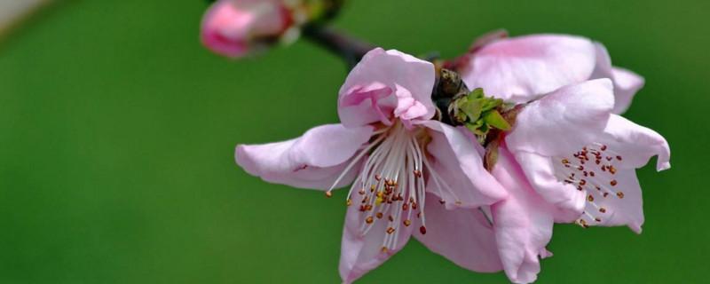两性花和单性花的区别
