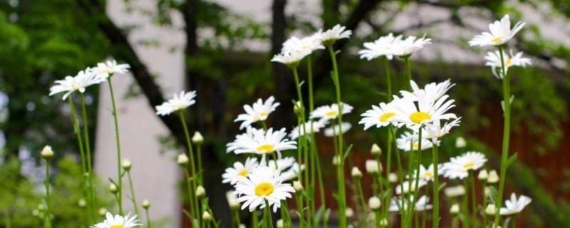 五月开什么花及其花语