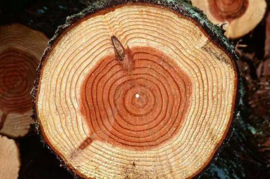 人们通过观察什么知道树的年龄