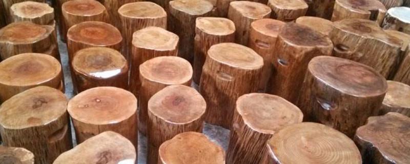 柯木是什么木