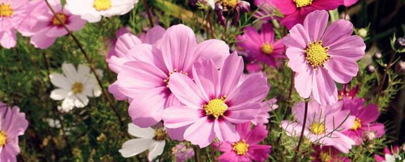 盆栽花卉种类