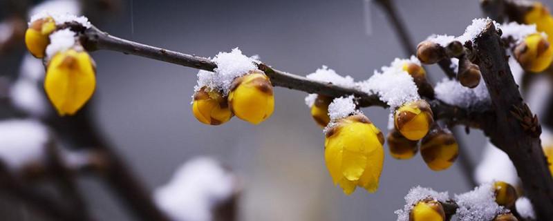 冬天有什么花开