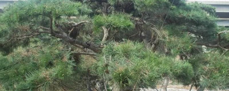 中国有哪些有趣的树