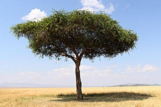 人们通过什么观察树的年龄
