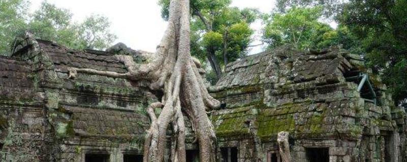 没有树会怎样_房顶长树怎么处理