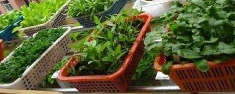 塑料盆种菜真的有毒吗
