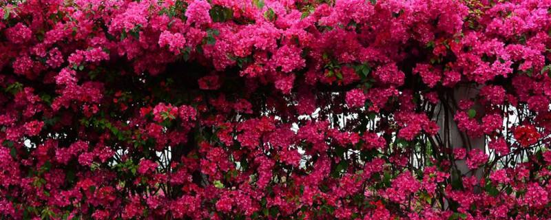 夏天室外适合种什么花