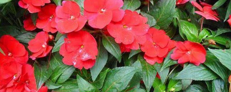会开花的花草的颜色与外形