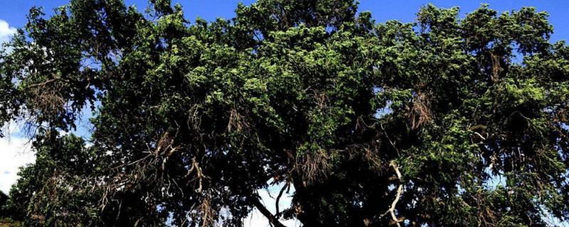 哪些树是阔叶树