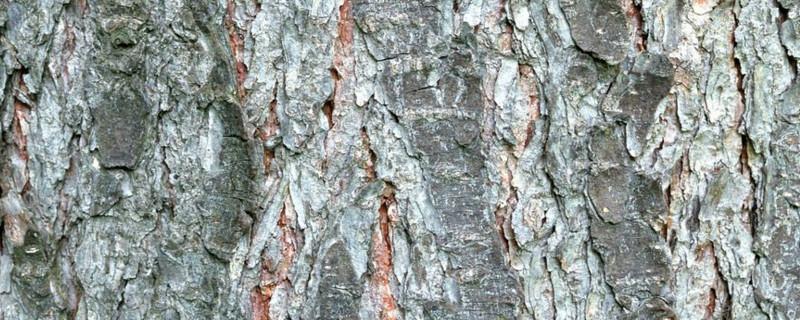 树木破皮能自愈吗