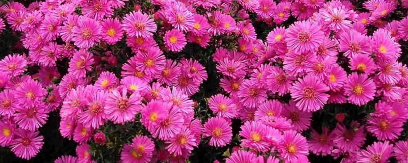 宿根花卉的特点