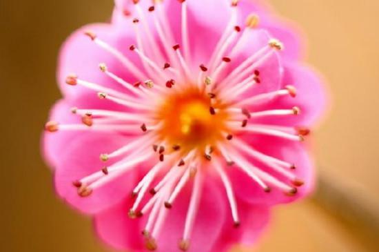 植物的花蕊分什么和什么