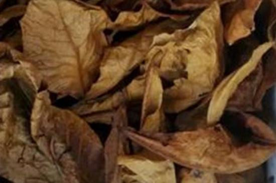 榄仁叶用什么叶子代替