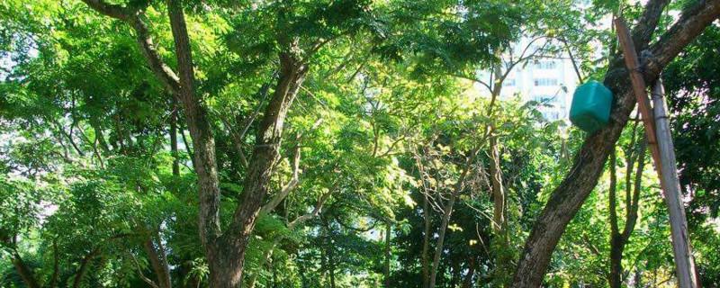 草花梨木植物石的作用