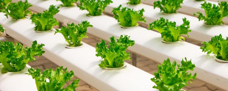 水培蔬菜利润分析