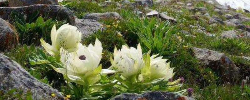 最罕见的花