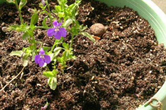 怎么把黄土变松软肥沃