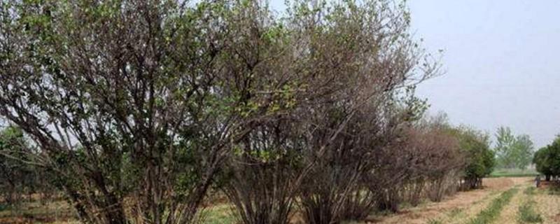 夏天如何种树成活率高