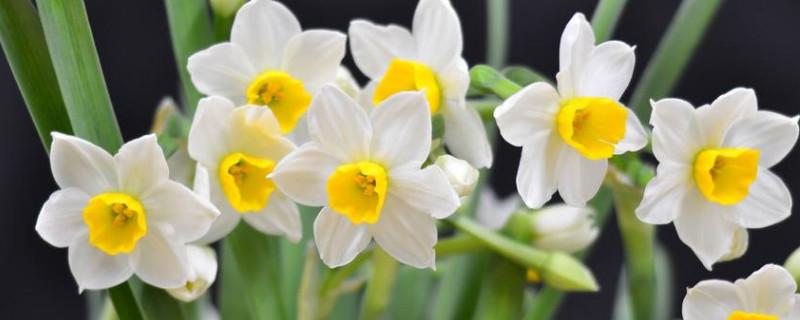 完全花和不完全花有哪些