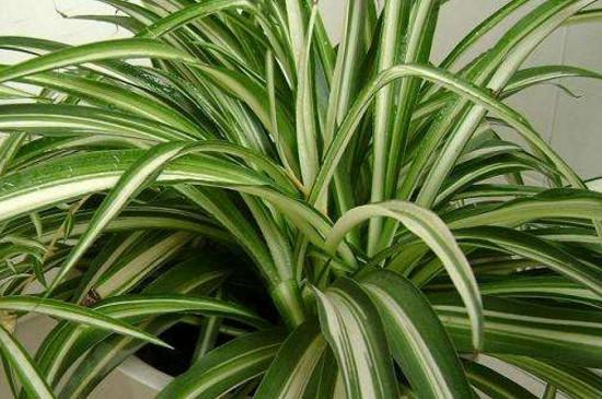 适合室内养的50种植物
