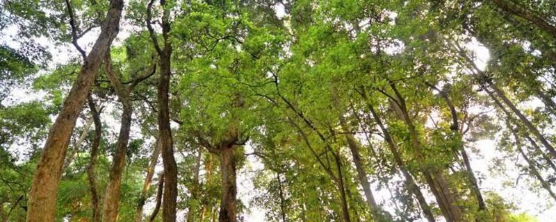金丝楠木产地