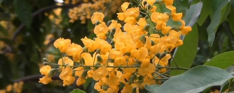 紫檀花卉養殖方法