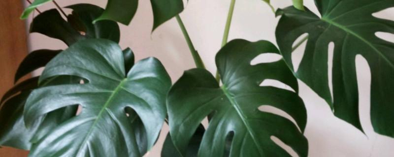 适应假山绿植品种