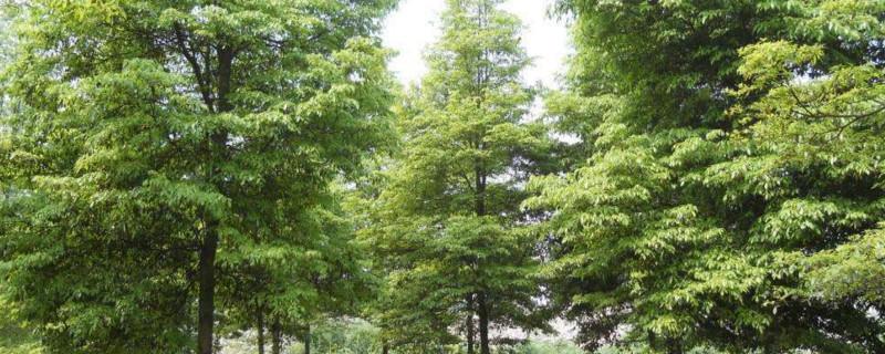金丝楠木和红木哪个贵