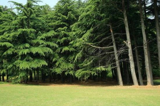 水杉树值钱吗