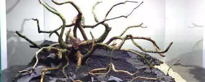 沉木是什么木