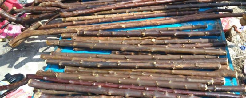 降龙木去皮过程