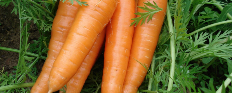 可以生吃的蔬菜