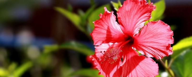 室内开花的好养的花