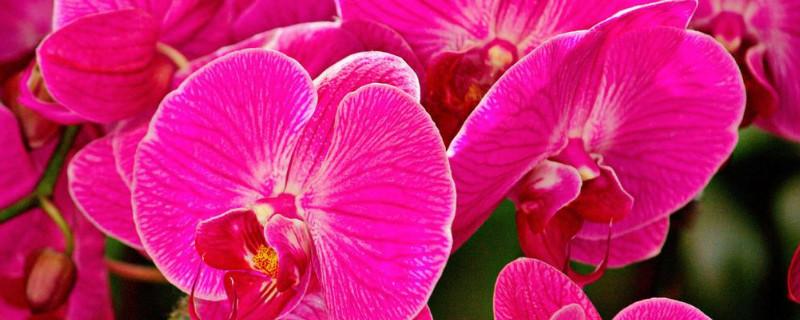 松树皮怎么发酵养兰花