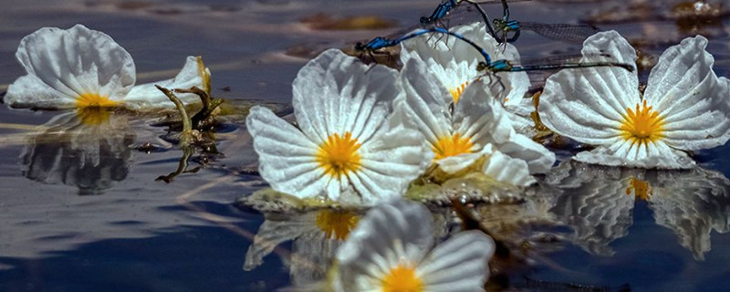 水性杨花是什么花