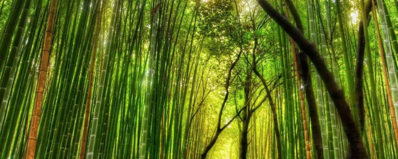 海南多彩竹怎么养