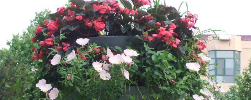 茶叶渣养哪种花