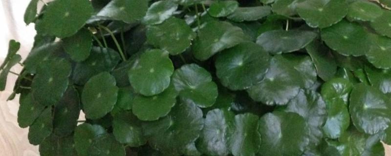 适合懒人养的室内植物